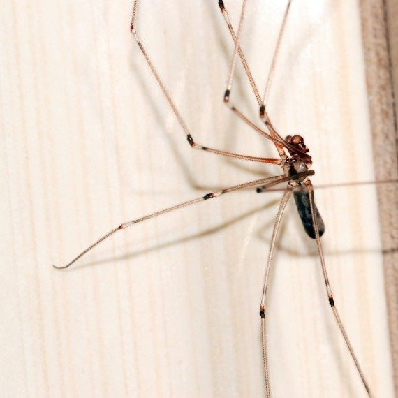 Spiders, Pest Control in Leytonstone, E11. Call Now! 020 8166 9746