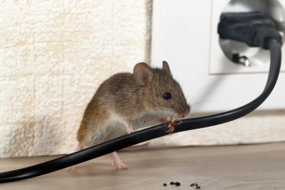 Pest Control in Leytonstone, E11. Call Now! 020 8166 9746